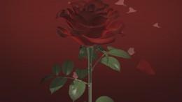 réalisation diaporama mariage thème la rose